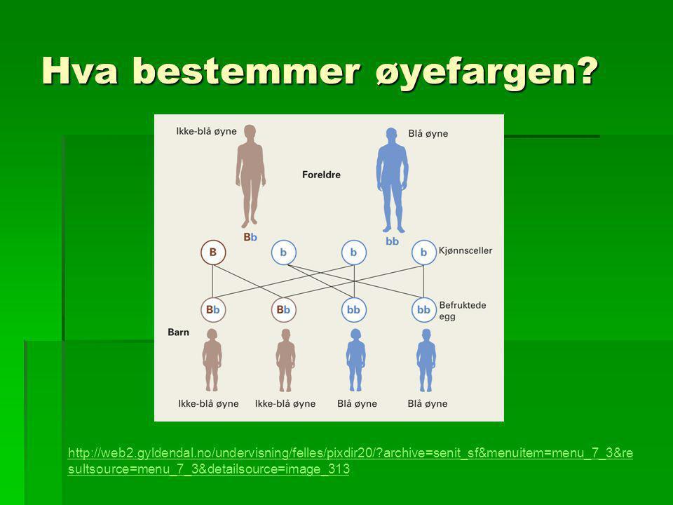 Hva bestemmer øyefargen? http://web2.gyldendal.no/undervisning/felles/pixdir20/?archive=senit_sf&menuitem=menu_7_3&re sultsource=menu_7_3&detailsource