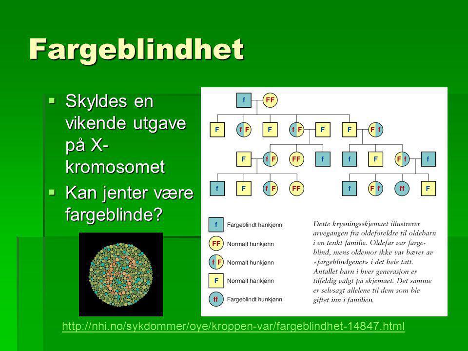 Fargeblindhet  Skyldes en vikende utgave på X- kromosomet  Kan jenter være fargeblinde? http://nhi.no/sykdommer/oye/kroppen-var/fargeblindhet-14847.