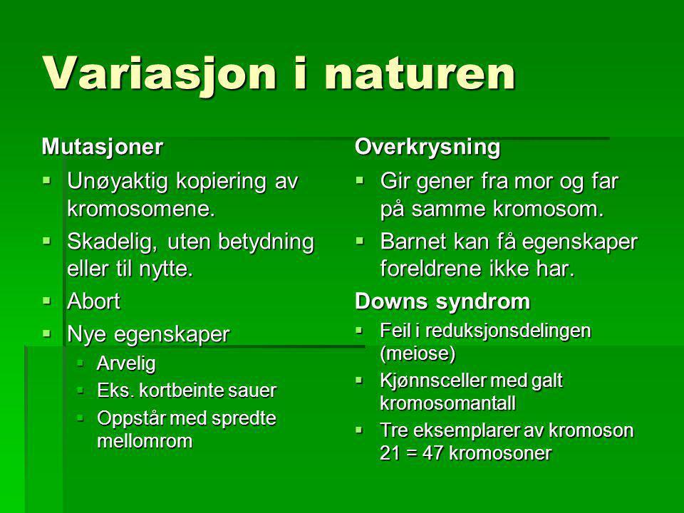 Variasjon i naturen Mutasjoner  Unøyaktig kopiering av kromosomene.  Skadelig, uten betydning eller til nytte.  Abort  Nye egenskaper  Arvelig 