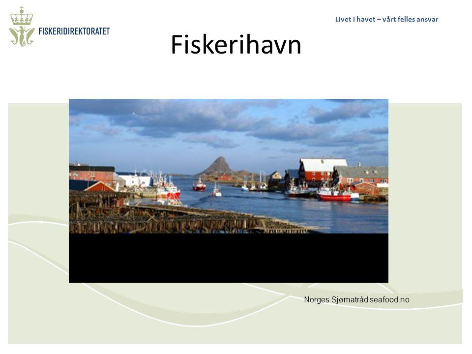 Livet i havet – vårt felles ansvar Geirangerfjorden Wikipedia.org