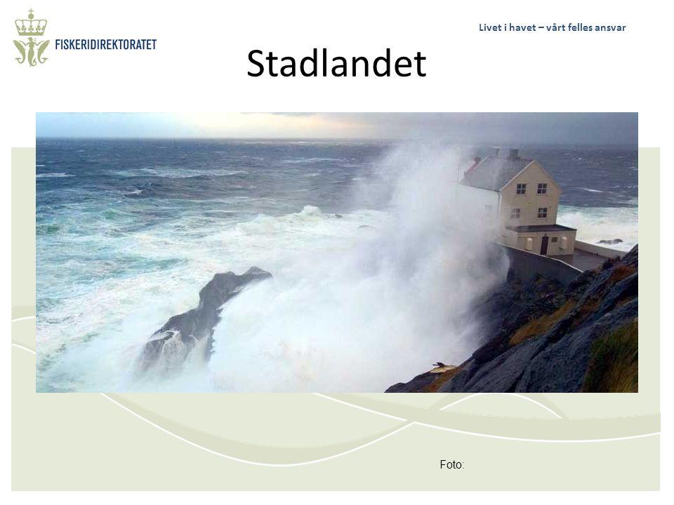 Livet i havet – vårt felles ansvar Stadlandet Foto: