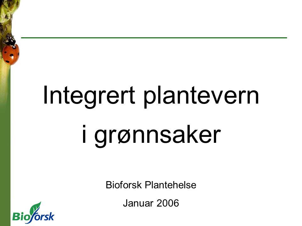 Integrert plantevern i grønnsaker Bioforsk Plantehelse Januar 2006