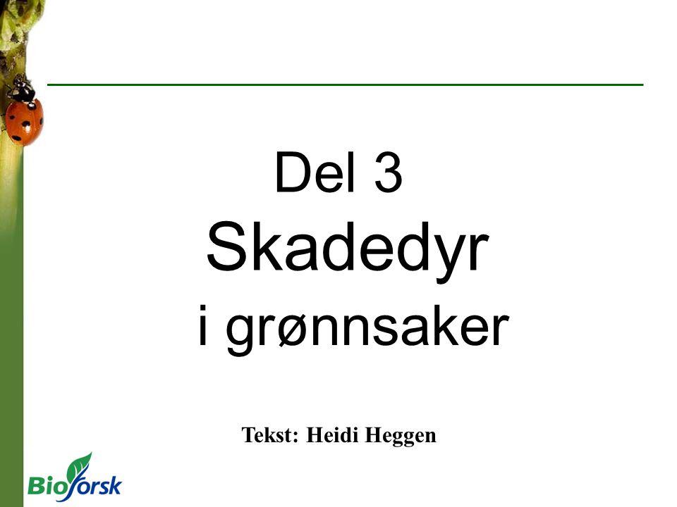 Del 3 Skadedyr i grønnsaker Tekst: Heidi Heggen