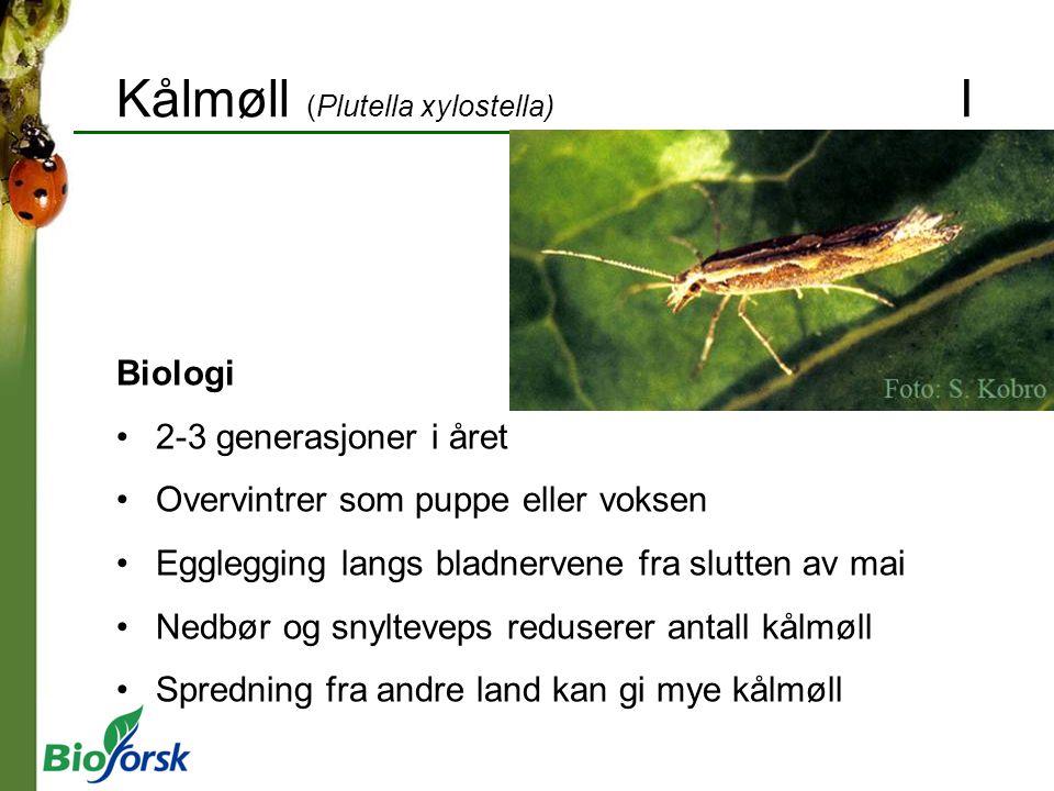 Kålmøll (Plutella xylostella) I Biologi 2-3 generasjoner i året Overvintrer som puppe eller voksen Egglegging langs bladnervene fra slutten av mai Ned
