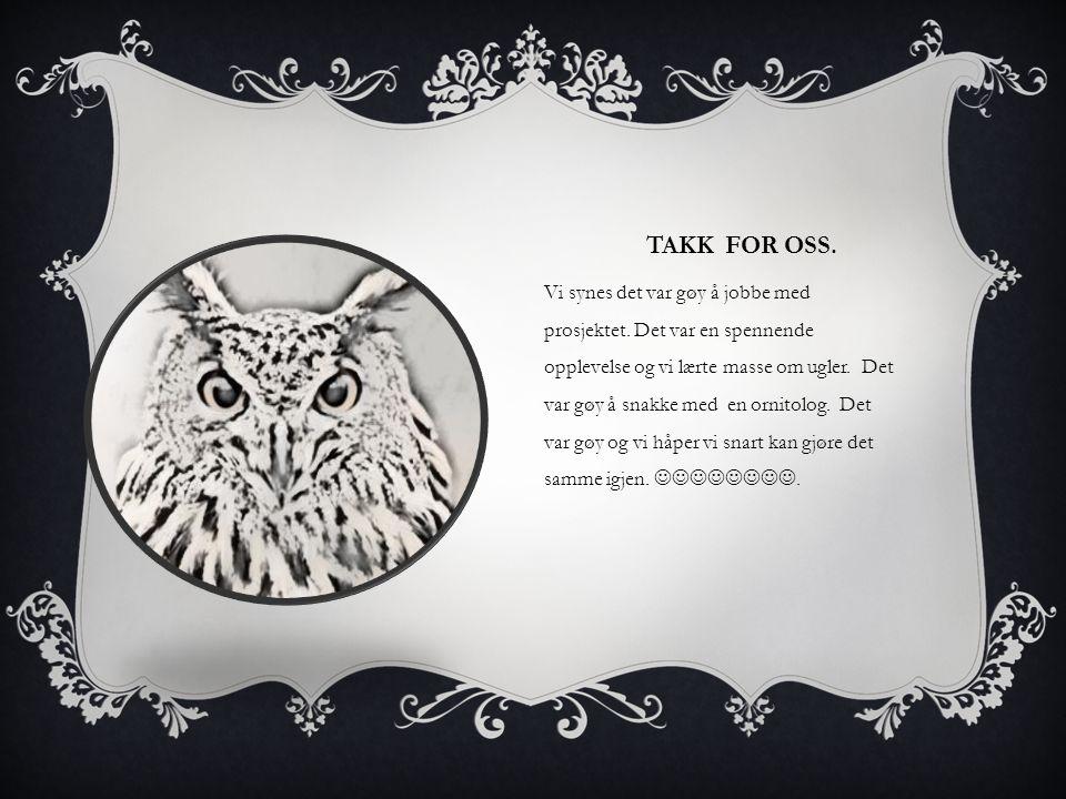 TAKK FOR OSS. Vi synes det var gøy å jobbe med prosjektet. Det var en spennende opplevelse og vi lærte masse om ugler. Det var gøy å snakke med en orn