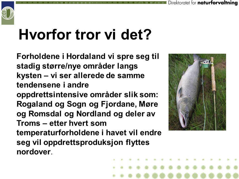 Oppdrett og villaks – konsekvenser for fiske Rømt fisk og lakselus i fokus til nå.