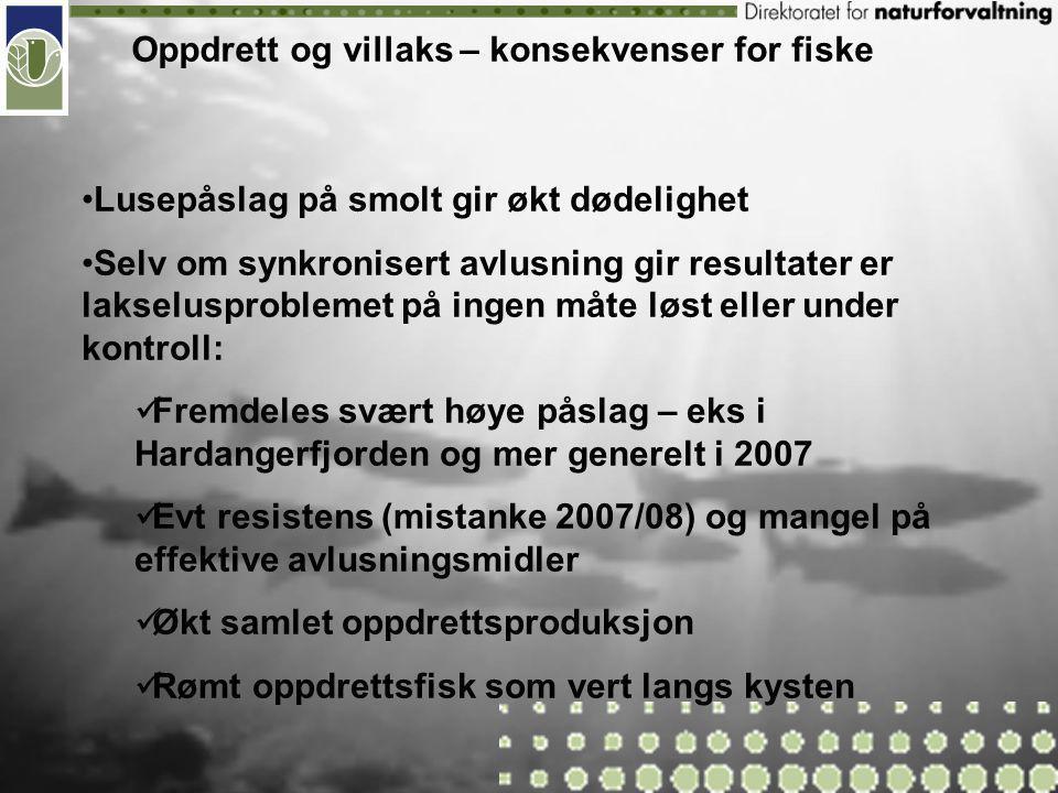 Sannsynligheten for store og stadig større rømmingstilfeller øker Svinn/tap av fisk underveis i produksjonsprosessen sannsynligvis minst like stort eller større problem Oppdrett og villaks – konsekvenser for fiske Innblanding av rømt fisk i ville bestander utgjør sammen med GS de to mest alvorlige menneskeskapte truslene mot villaksens videre eksistens i Norge - har potensial til å utrydde de ville bestandene – forsvinner ikke helt, men blir byttet ut (jevnlig mer enn 5% og 20% innslag), konsekvens: