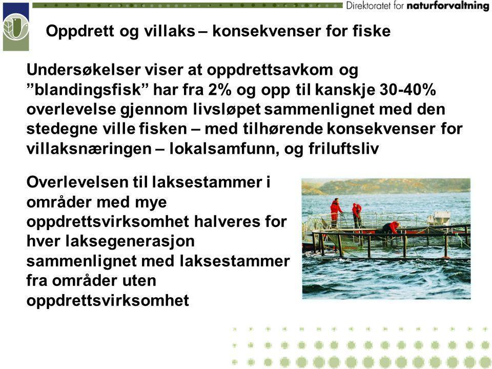 Oppdrett og villaks – konsekvenser for fiske Har alt dette allerede skjedd.