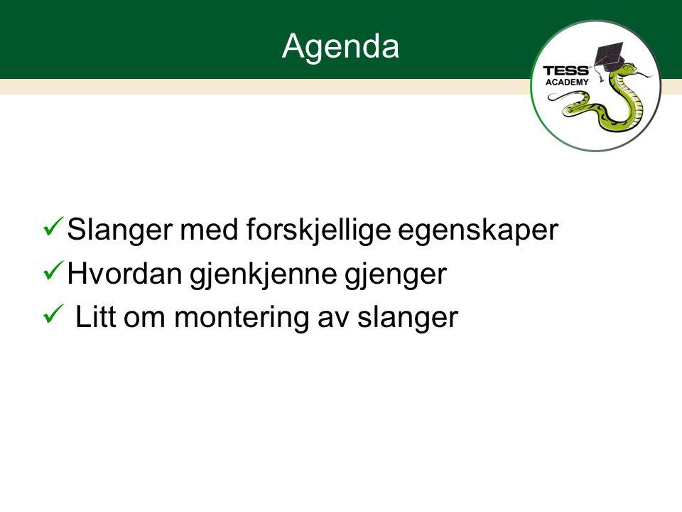 Agenda Slanger med forskjellige egenskaper Hvordan gjenkjenne gjenger Litt om montering av slanger