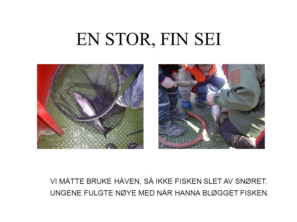 EN STOR, FIN SEI VI MÅTTE BRUKE HÅVEN, SÅ IKKE FISKEN SLET AV SNØRET.