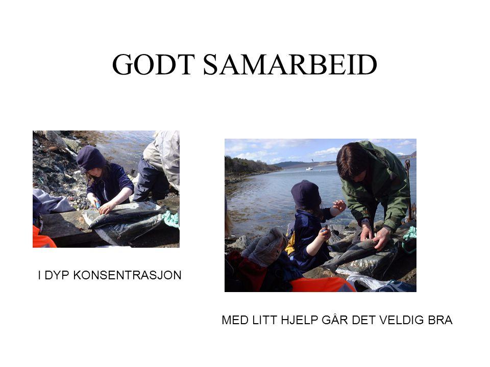 GODT SAMARBEID I DYP KONSENTRASJON MED LITT HJELP GÅR DET VELDIG BRA