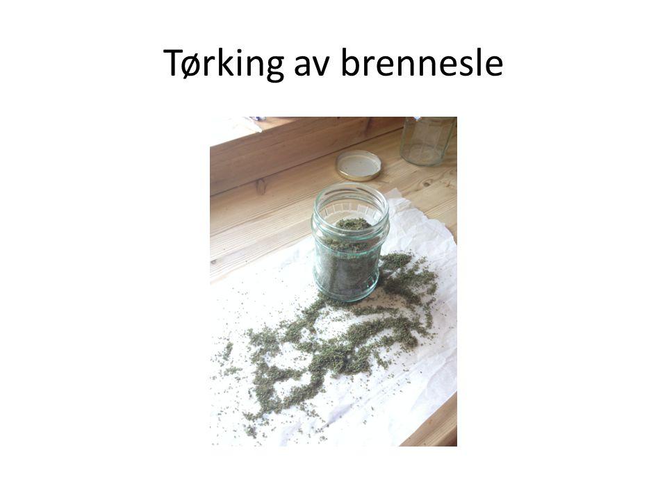 Tørking av brennesle