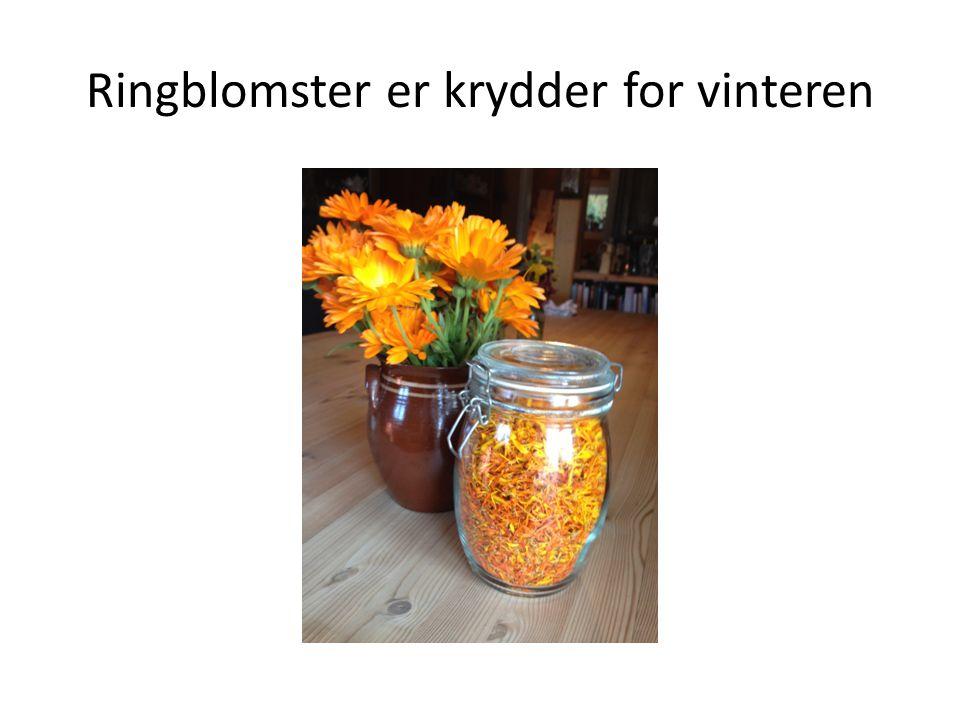 Ringblomster er krydder for vinteren