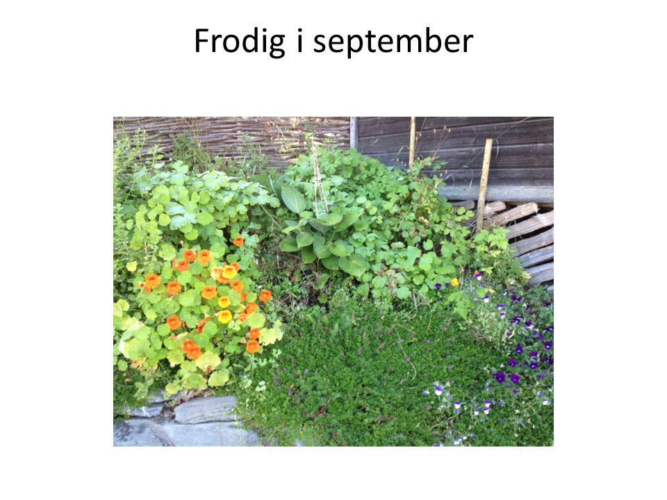 Frodig i september