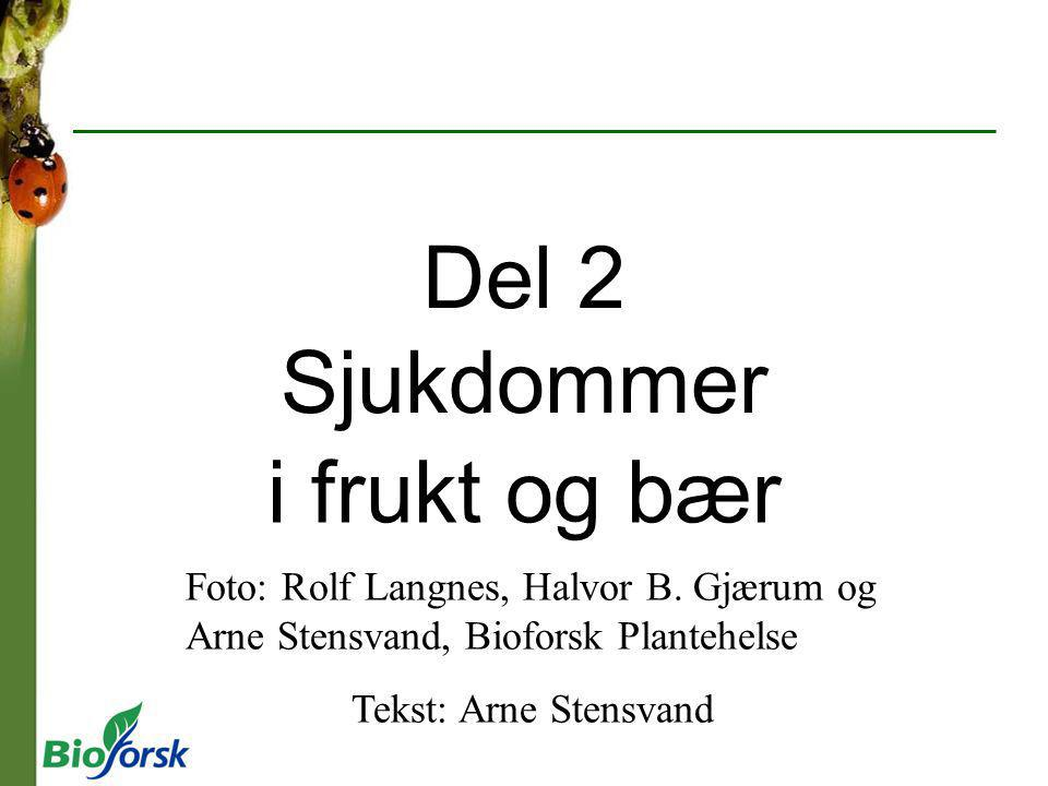 Del 2 Sjukdommer i frukt og bær Foto: Rolf Langnes, Halvor B. Gjærum og Arne Stensvand, Bioforsk Plantehelse Tekst: Arne Stensvand