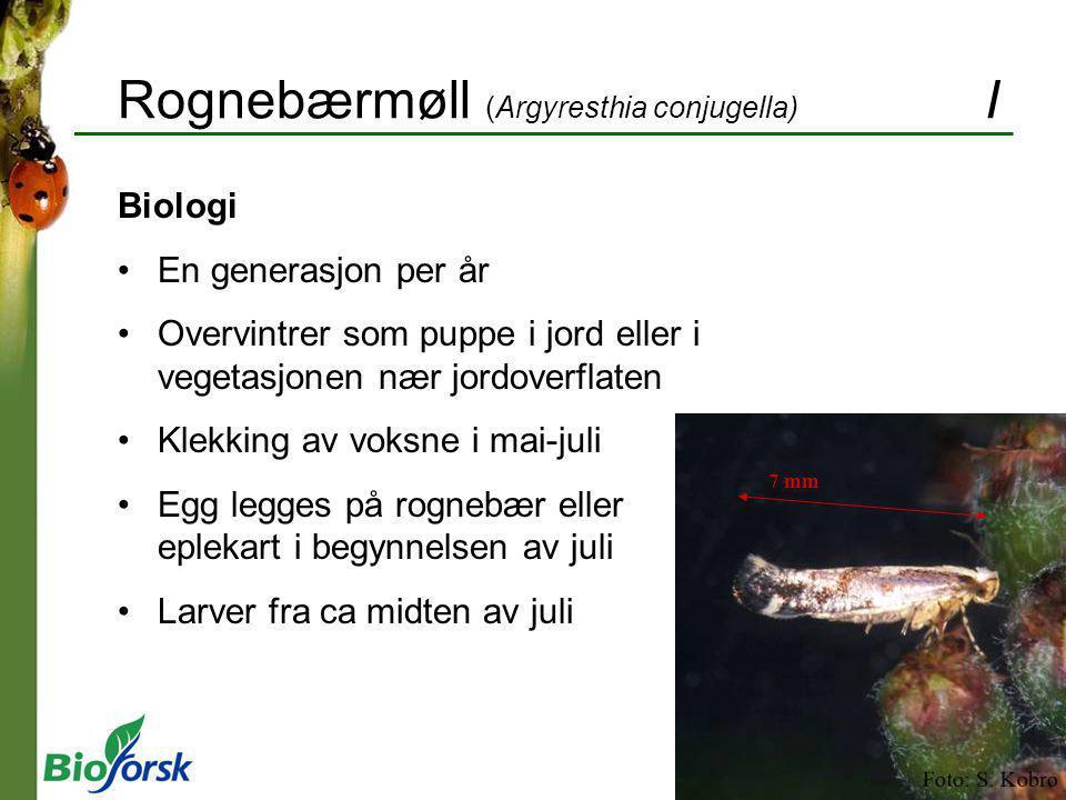 Rognebærmøll (Argyresthia conjugella) I Biologi En generasjon per år Overvintrer som puppe i jord eller i vegetasjonen nær jordoverflaten Klekking av