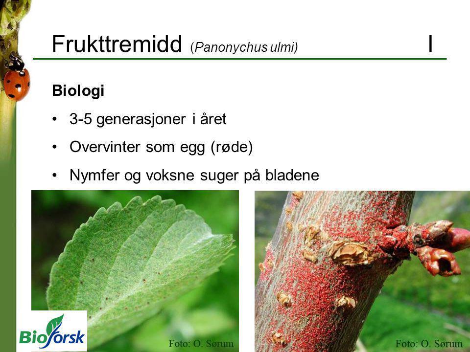 Frukttremidd (Panonychus ulmi) I Biologi 3-5 generasjoner i året Overvinter som egg (røde) Nymfer og voksne suger på bladene