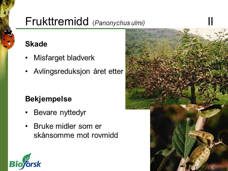 Frukttremidd (Panonychus ulmi) II Skade Misfarget bladverk Avlingsreduksjon året etter Bekjempelse Bevare nyttedyr Bruke midler som er skånsomme mot r