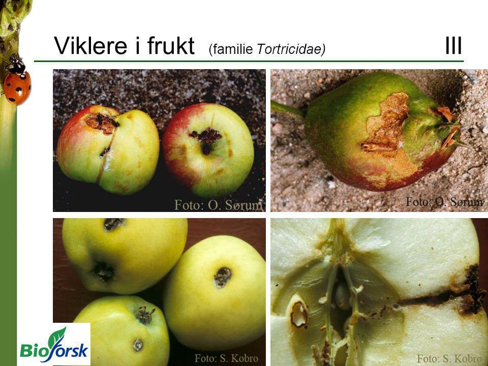 Viklere i frukt (familie Tortricidae) III