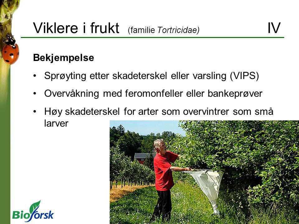 Viklere i frukt (familie Tortricidae) IV Bekjempelse Sprøyting etter skadeterskel eller varsling (VIPS) Overvåkning med feromonfeller eller bankeprøve