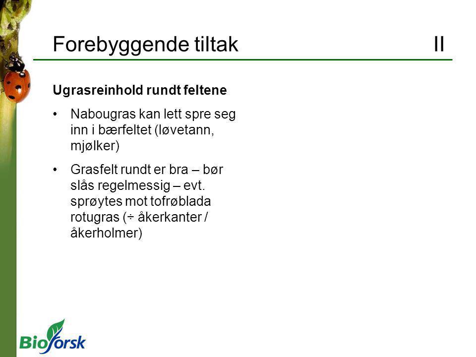 Rognebærmøll (Argyresthia conjugella) II Skade Brune ganger etter larvegnag i eple Brune søkk utenpå Bekjempelse Sprøyting etter varsling