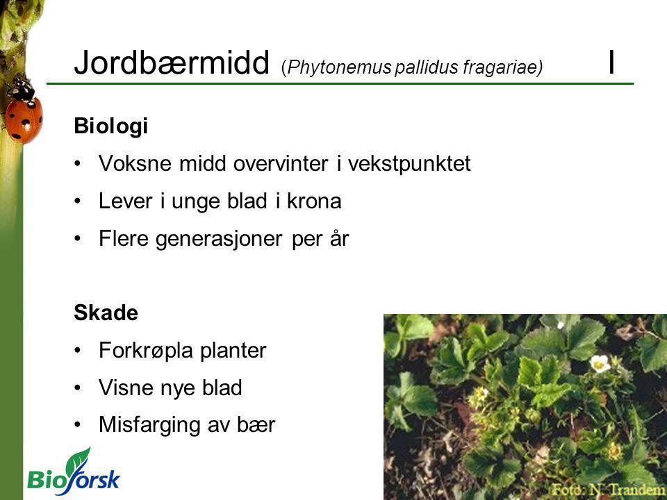 Jordbærmidd (Phytonemus pallidus fragariae) I Biologi Voksne midd overvinter i vekstpunktet Lever i unge blad i krona Flere generasjoner per år Skade