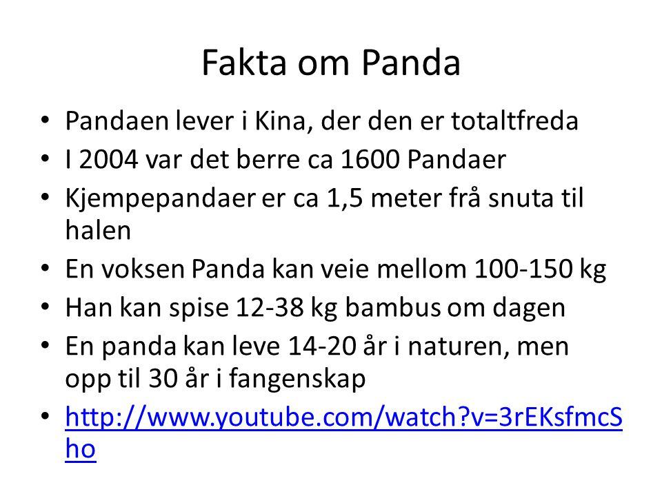 Fakta om Panda Pandaen lever i Kina, der den er totaltfreda I 2004 var det berre ca 1600 Pandaer Kjempepandaer er ca 1,5 meter frå snuta til halen En