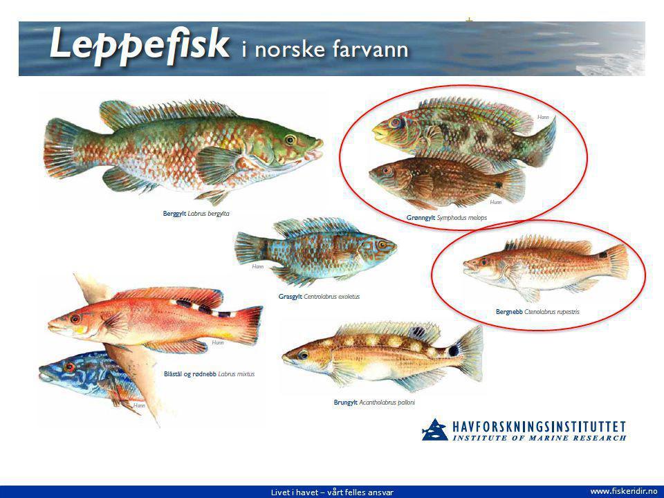 Livet i havet – vårt felles ansvar www.fiskeridir.no