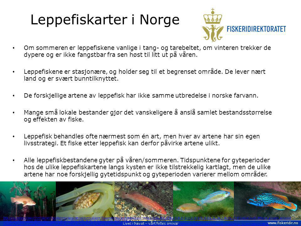 Livet i havet – vårt felles ansvar www.fiskeridir.no Leppefiskarter i Norge Om sommeren er leppefiskene vanlige i tang- og tarebeltet, om vinteren tre