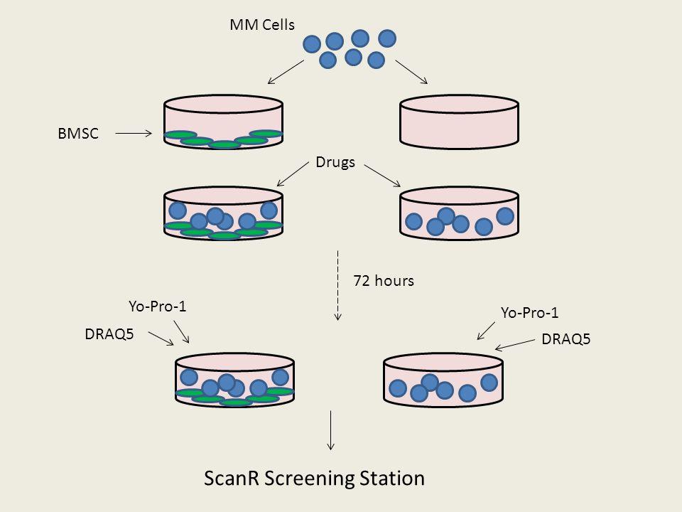 BMSC MM Cells Drugs 72 hours DRAQ5 Yo-Pro-1 DRAQ5 Yo-Pro-1 ScanR Screening Station