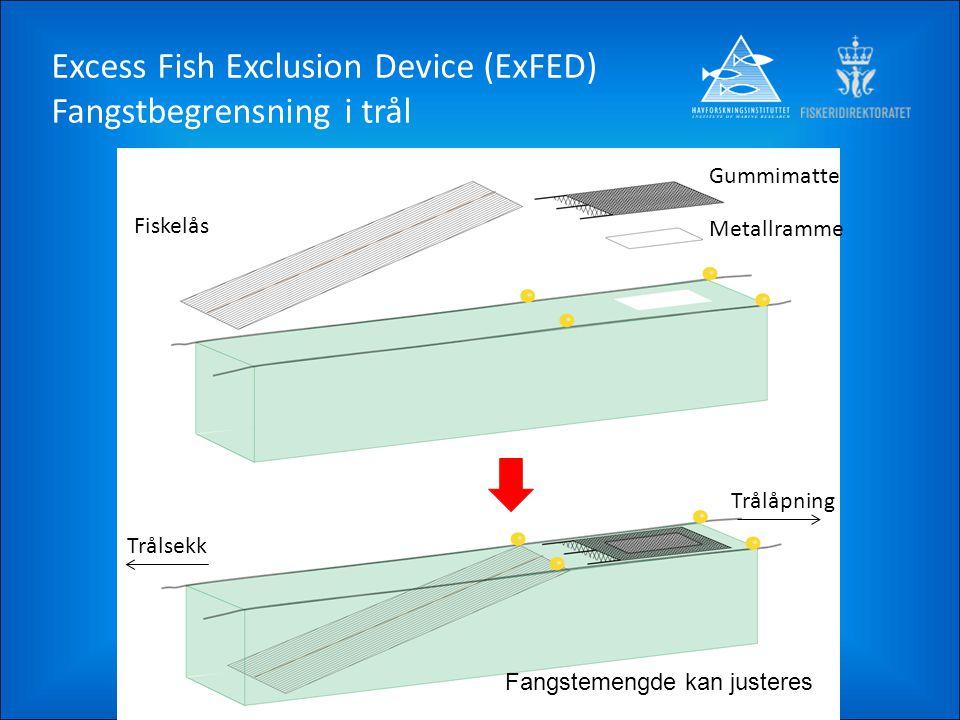 Fiskelås Gummimatte Metallramme Trålåpning Trålsekk Fangstemengde kan justeres Excess Fish Exclusion Device (ExFED) Fangstbegrensning i trål