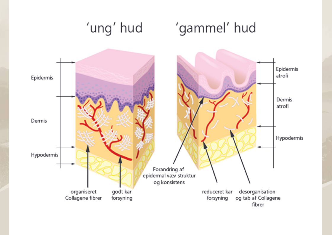 Produkter til behandling av hud 1.Produkter, som skal forbedre våres utseende (kosmetikk) 2.Produkter, som skal beskytte mot ytre påvirkning (for eks.