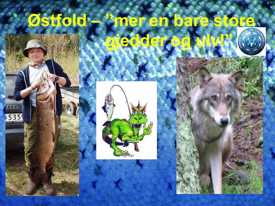 Østfold – mer en bare store gjedder og ulv!