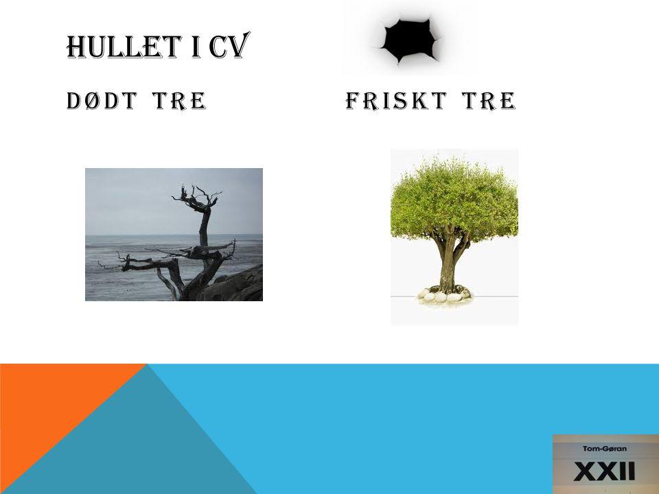 HULLET I CV DØDT TREFRISKT TRE