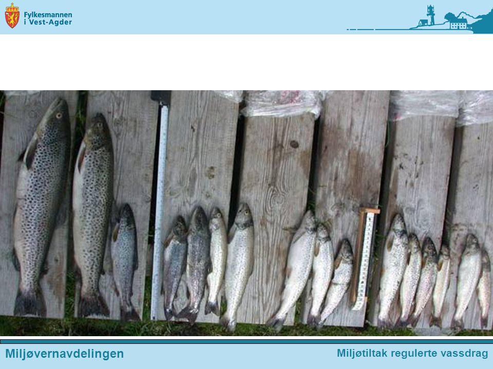 Miljøvernavdelingen Miljøtiltak regulerte vassdrag