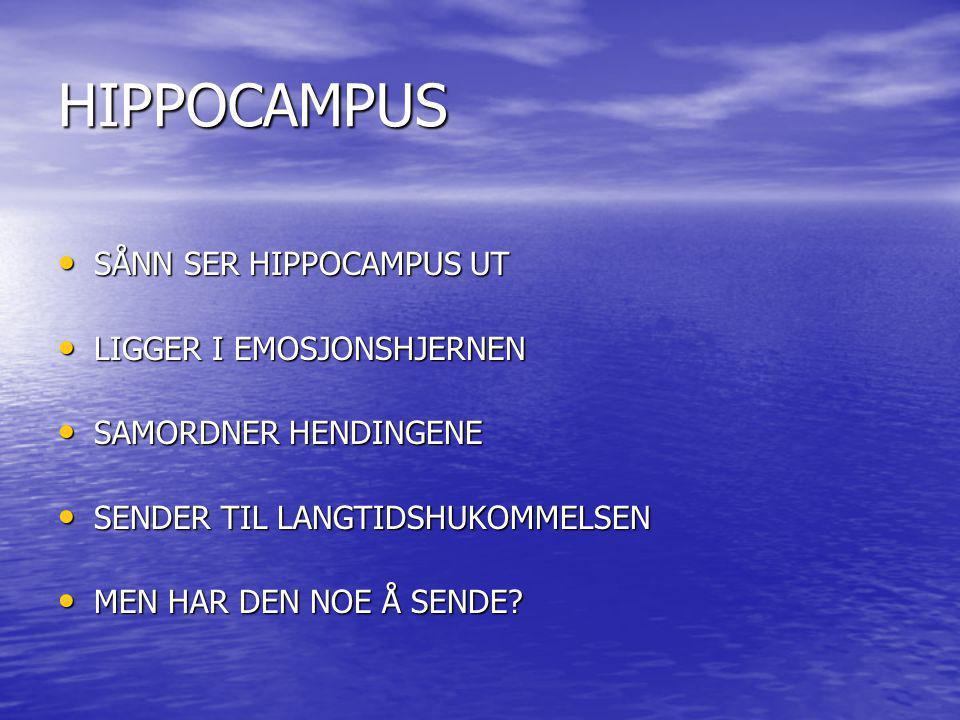 HIPPOCAMPUS SÅNN SER HIPPOCAMPUS UT SÅNN SER HIPPOCAMPUS UT LIGGER I EMOSJONSHJERNEN LIGGER I EMOSJONSHJERNEN SAMORDNER HENDINGENE SAMORDNER HENDINGEN