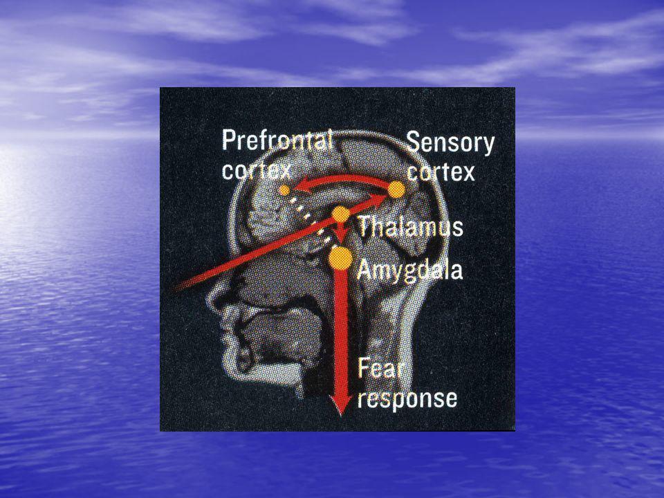 TOLERANSEVINDUET 3 «Sammensmeltingen» av utviklingspsykologien og traumepsykologien – jfr.
