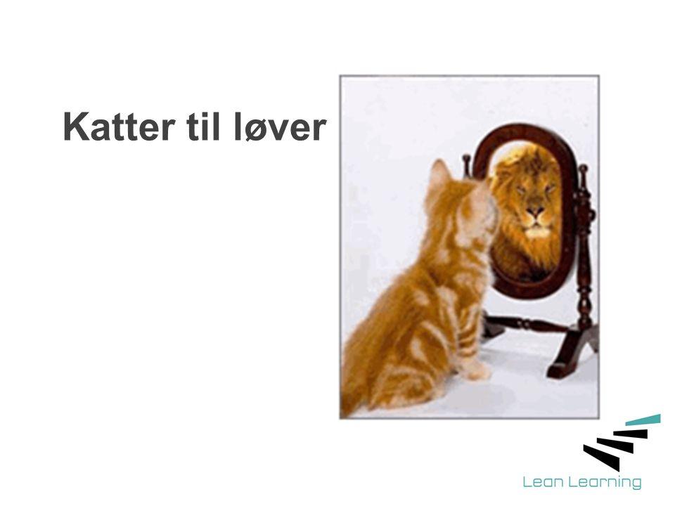 Katter til løver