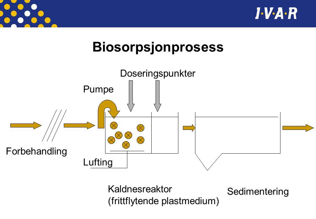 Biosorpsjonprosess Forbehandling Kaldnesreaktor (frittflytende plastmedium) Sedimentering Doseringspunkter Pumpe Lufting