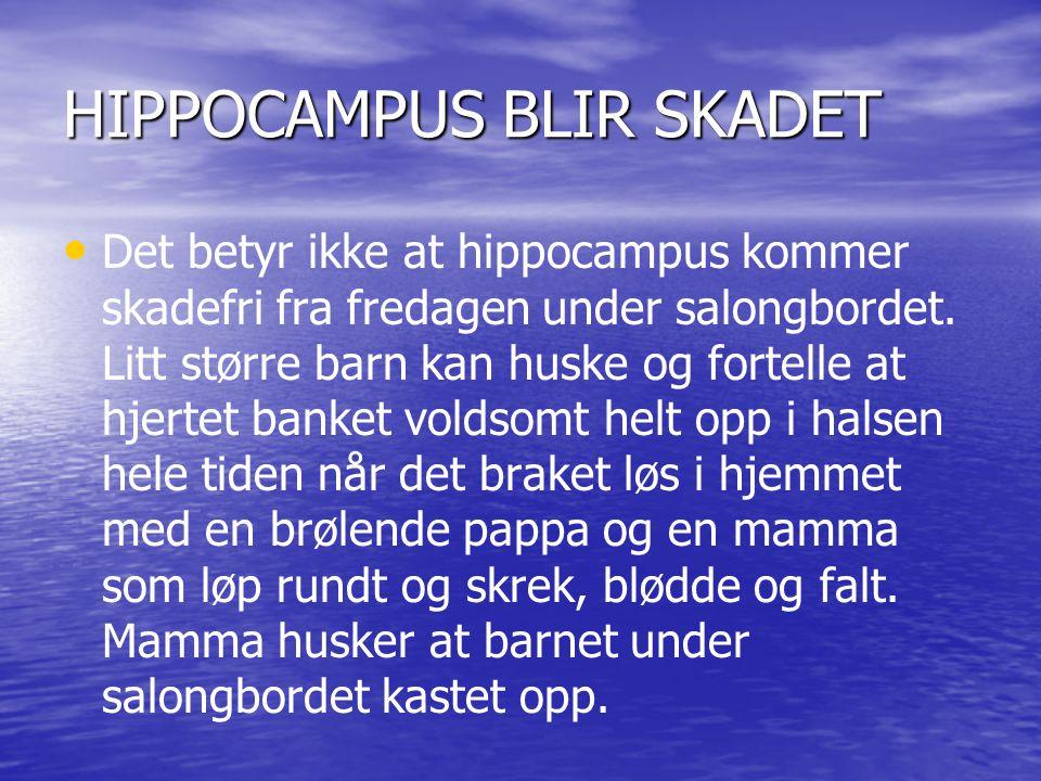 HIPPOCAMPUS BLIR SKADET Det betyr ikke at hippocampus kommer skadefri fra fredagen under salongbordet. Litt større barn kan huske og fortelle at hjert