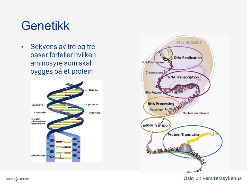Sekvens av tre og tre baser forteller hvilken aminosyre som skal bygges på et protein