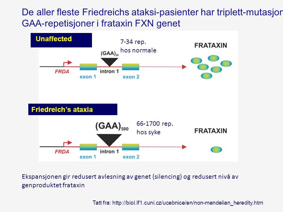 De aller fleste Friedreichs ataksi-pasienter har triplett-mutasjon med utvidede GAA-repetisjoner i frataxin FXN genet Tatt fra: http://biol.lf1.cuni.c