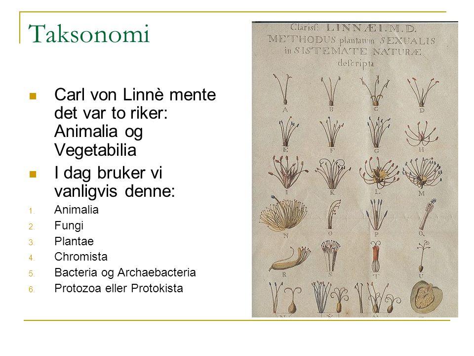 Taksonomi Carl von Linnè mente det var to riker: Animalia og Vegetabilia I dag bruker vi vanligvis denne: 1. Animalia 2. Fungi 3. Plantae 4. Chromista