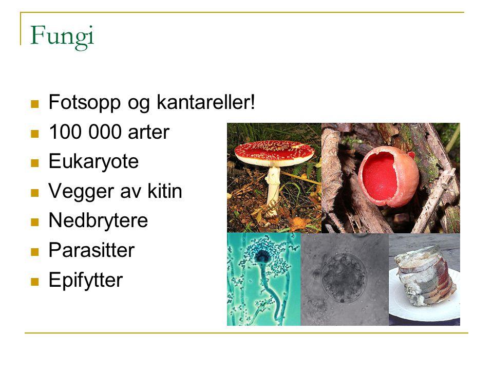 Fungi Fotsopp og kantareller! 100 000 arter Eukaryote Vegger av kitin Nedbrytere Parasitter Epifytter