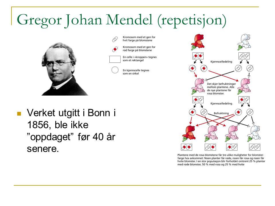 """Gregor Johan Mendel (repetisjon) Verket utgitt i Bonn i 1856, ble ikke """"oppdaget"""" før 40 år senere."""