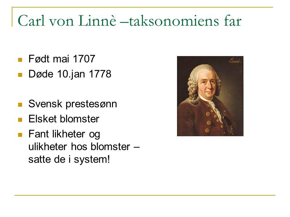 Carl von Linnè –taksonomiens far Født mai 1707 Døde 10.jan 1778 Svensk prestesønn Elsket blomster Fant likheter og ulikheter hos blomster – satte de i