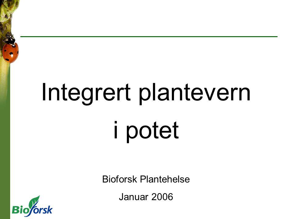 Integrert plantevern i potet Bioforsk Plantehelse Januar 2006