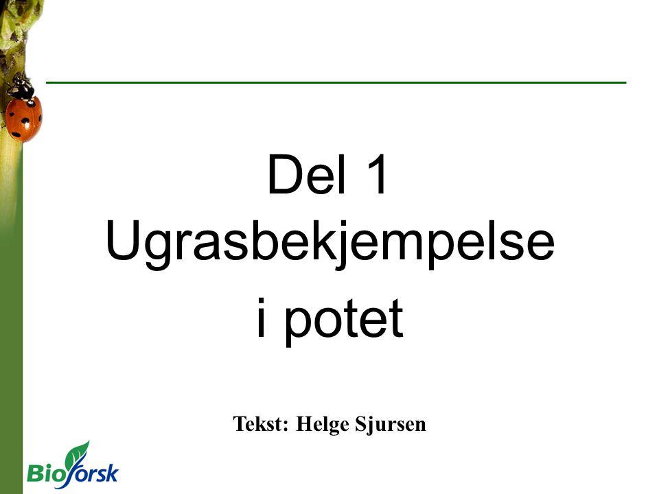 Del 1 Ugrasbekjempelse i potet Tekst: Helge Sjursen