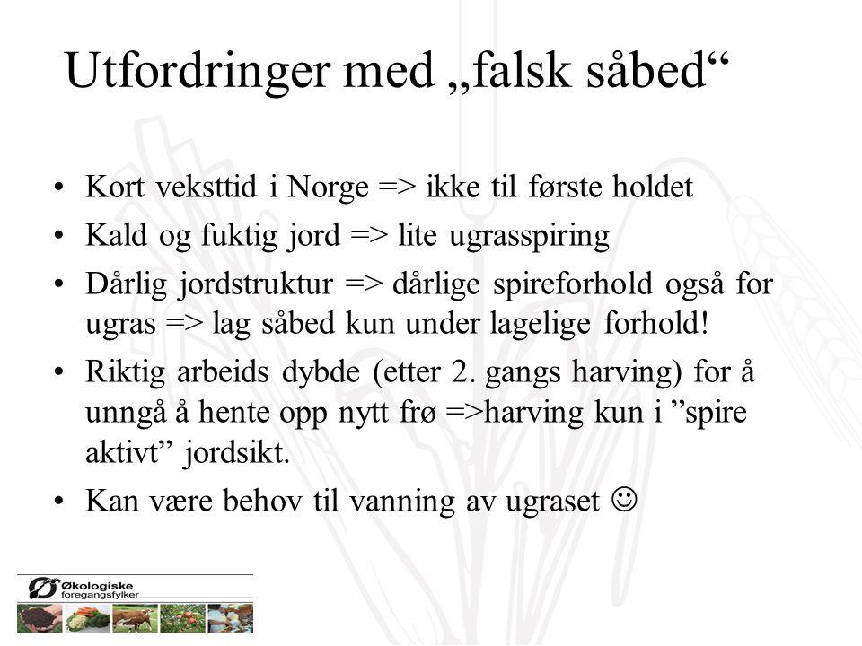 """Utfordringer med """"falsk såbed"""" Kort veksttid i Norge => ikke til første holdet Kald og fuktig jord => lite ugrasspiring Dårlig jordstruktur => dårlige"""