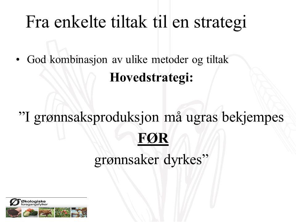 """Fra enkelte tiltak til en strategi God kombinasjon av ulike metoder og tiltak Hovedstrategi: """"I grønnsaksproduksjon må ugras bekjempes FØR grønnsaker"""